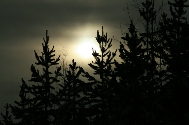 Moonlight by Sonny Alfredo Galea   Wild Wilderness Photography