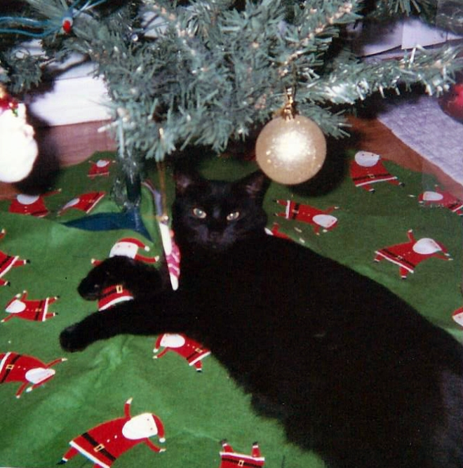 Lucy under the Xmas tree